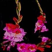 Night Miracle-sword Lily Art Print