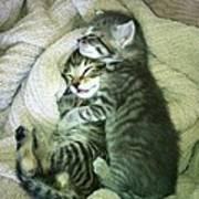 Night Night Kitties Art Print