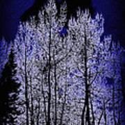 Night Of The Wolf Art Print