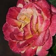 Night Rose Art Print