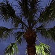 Night Sky Through The Palm Art Print