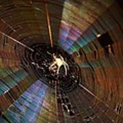 Nighttime Spider Web Art Print