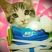 Nike Kitten Art Print by Alexandria Johnson