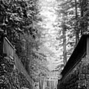 Nikko Pathway And Fog Art Print