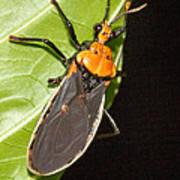 Nocturnal Bug Art Print