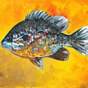 North America Sunfish Art Print