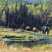 North American Waterhole Art Print