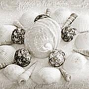 North Carolina Circle Of Sea Shells Bw Art Print
