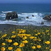Northern California Coast Art Print