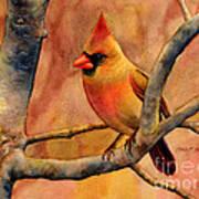Northern Cardinal II Art Print