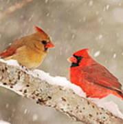 Northern Cardinals Art Print