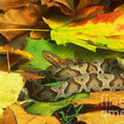 Northern Copperhead Camouflaged Art Print