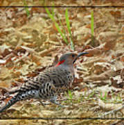 Northern Flicker Woodpecker Art Print