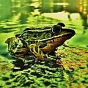 Northern Leopard Frog Art Print
