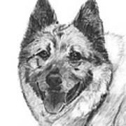 Norwegian Elkhound Sketch Art Print