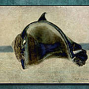 Not A Dolphin Art Print