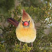 Not-so-angry Bird Art Print
