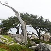 Not The Ghost Tree Art Print
