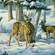 Not This Year - Mule Deer Art Print