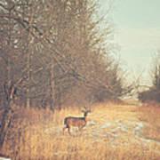 November Deer Art Print