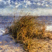November Dune Grass Art Print