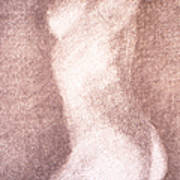 Nude Female Torso Drawings 3 Art Print