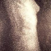 Nude Female Torso Drawings 4 Art Print