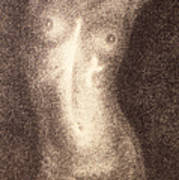 Nude Female Torso Drawings 5 Art Print