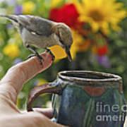 Nuthatch Bird On Finger Photo Art Print