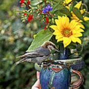 Nuthatch Bird Having Tea Art Print