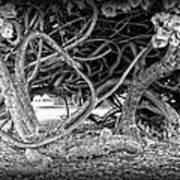 Oahu Ground Vines - Hawaii Art Print by Daniel Hagerman