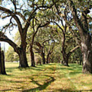 Oak Allee At Roseland Plantation  Art Print