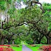Oak Allee Brookgreen  Art Print