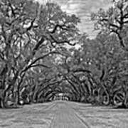 Oak Alley 3 Monochrome Art Print