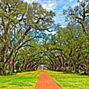 Oak Alley 3 Oil Art Print