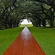 Oak Alley Path Art Print