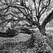 Oak And Ivy Bw Art Print