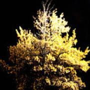 Oak At Night Art Print