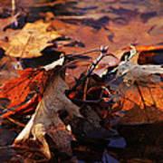 Oak Leaves Art Print
