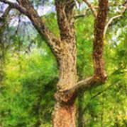 Oak On The Etowah Art Print