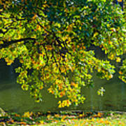 Oak Tree By The Pond - Featured 3 Art Print