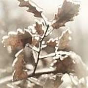 Oak Tree Leaves Frozen In Ice Art Print