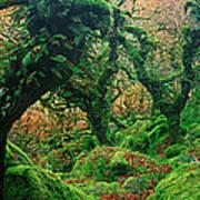 Oak Trees In A Forest, Wistmans Wood Art Print