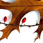 Oak With Berries Art Print