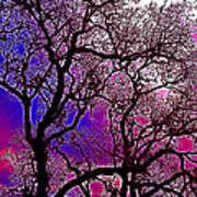 Oaks 6 Art Print