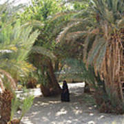 Oase Rest Desert Sinai Egypt Art Print