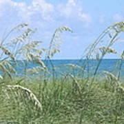 Ocean And Oats Art Print