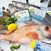 Ocean Perch On A Fish Counter Art Print