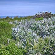 Ocean Vegetation Art Print