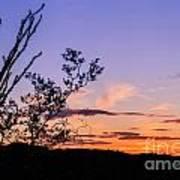 Ocotillo Sunset Art Print